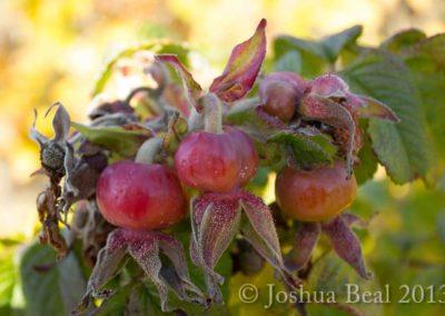 Poison berries