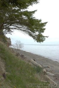Fir tree framing a coast line