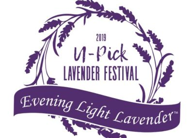 Evening Light Lavender festival shirt 2019