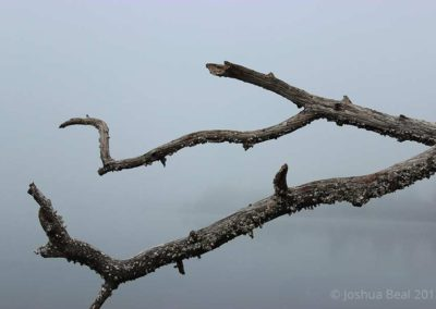 Barren branch in suspended limbo