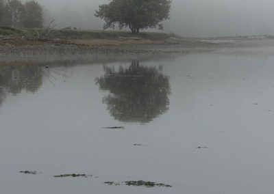 Tree in foggy reflection