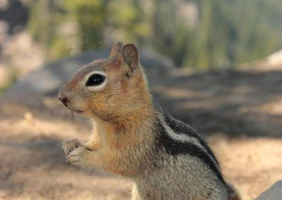Squirrel at attention