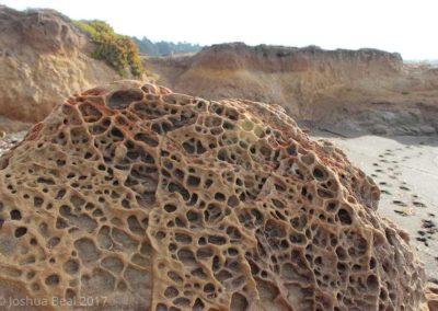Sponge textured rock on a beach