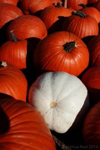 White pumpkin with orange pumpkins
