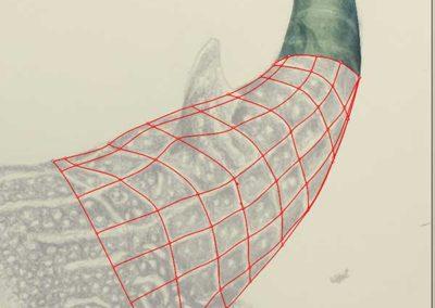Mesh development of whale shark tail