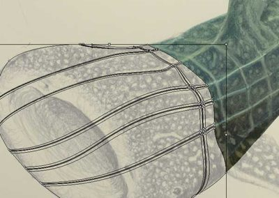 Mesh development of whale shark mouth