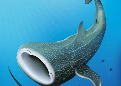 Final design of Whale Shark poster